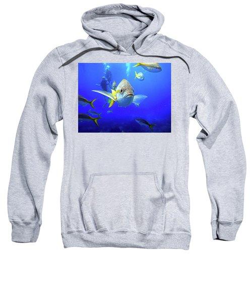 Yellowtails Sweatshirt