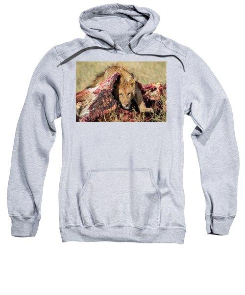 Young Lion On Cape Buffalo Kill Sweatshirt