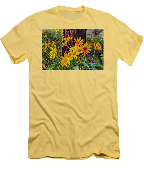 Arrowleaf Balsamroot Men's T-Shirt (Athletic Fit)