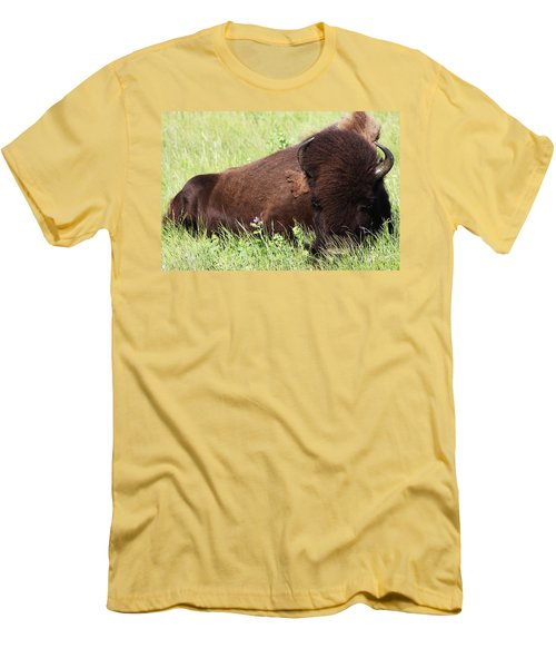 Men's T-Shirt (Slim Fit) featuring the photograph Bison Nap by Alyce Taylor