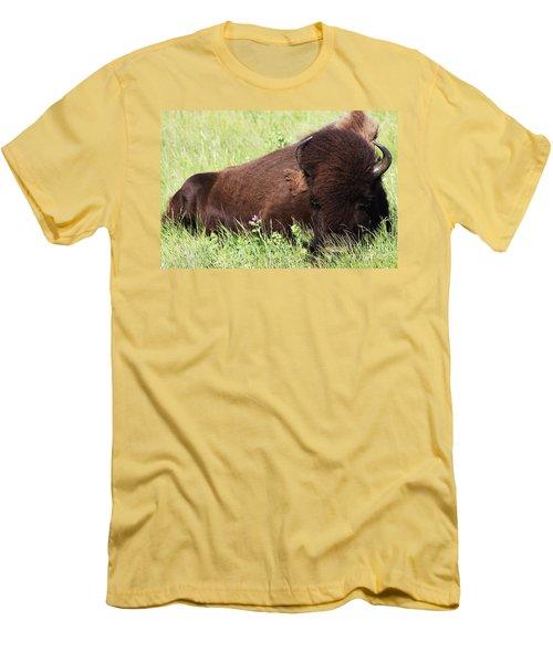 Bison Nap Men's T-Shirt (Slim Fit) by Alyce Taylor