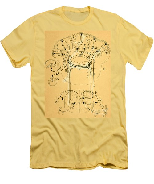 Brain Vestibular Sensor Connections By Cajal 1899 Men's T-Shirt (Athletic Fit)