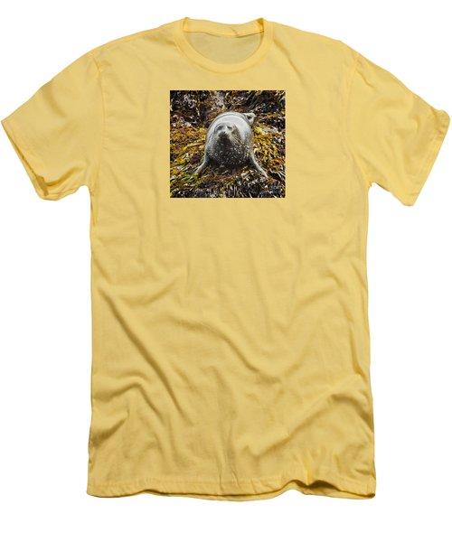 Harbor Seal Men's T-Shirt (Athletic Fit)