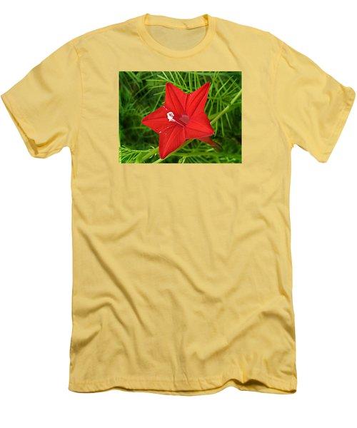 Hummingbird Vine Men's T-Shirt (Slim Fit)