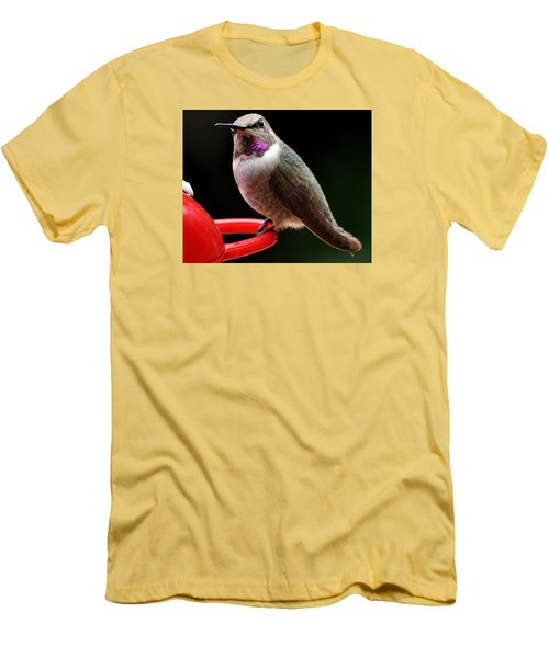 Men's T-Shirt (Slim Fit) featuring the photograph Pregnant Female Caliope With Purple Throat by Jay Milo