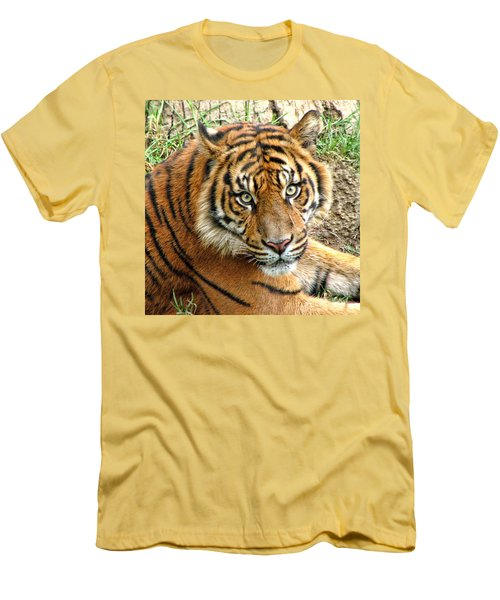 Staring Tiger Men's T-Shirt (Athletic Fit)