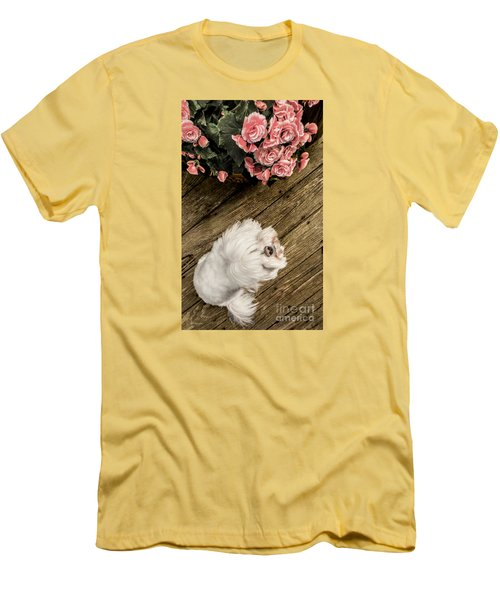 Havanese Puppy Men's T-Shirt (Athletic Fit)