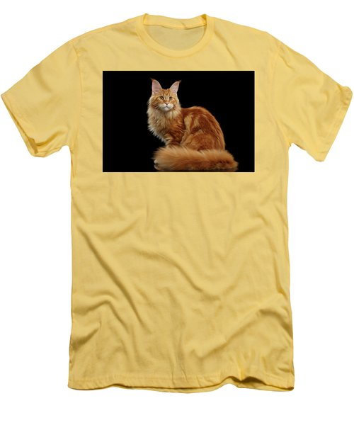 Ginger Maine Coon Cat Isolated On Black Background Men's T-Shirt (Slim Fit) by Sergey Taran