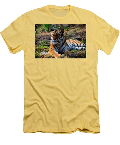 Men's T-Shirt (Slim Fit) featuring the mixed media Amur Tiger 8 by Angelina Vick