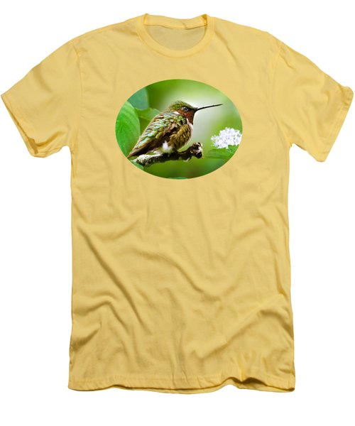 Male Ruby-throated Hummingbird At Rest Men's T-Shirt (Athletic Fit)