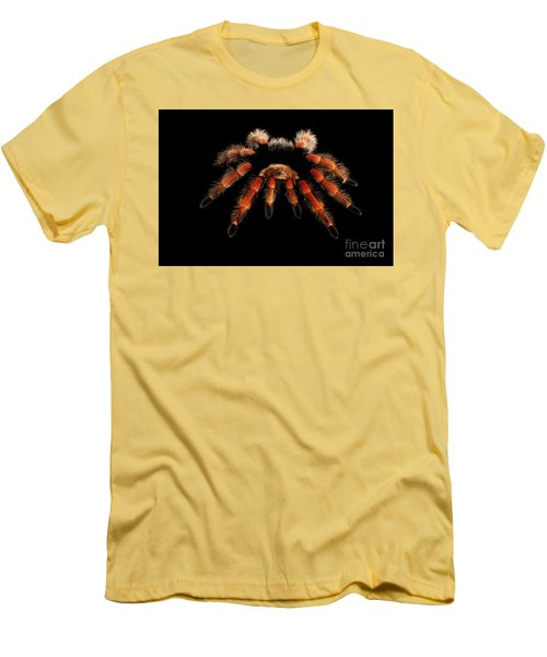 Big Hairy Tarantula Theraphosidae Isolated On Black Background Men's T-Shirt (Athletic Fit)