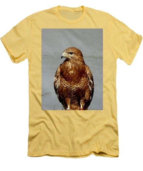 Bird Of Prey  Men's T-Shirt (Athletic Fit)