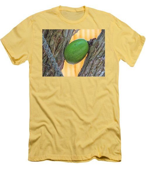 Calabash Fruit Men's T-Shirt (Athletic Fit)
