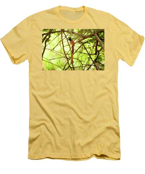 Ceylon Paradise Flycatcher Men's T-Shirt (Athletic Fit)