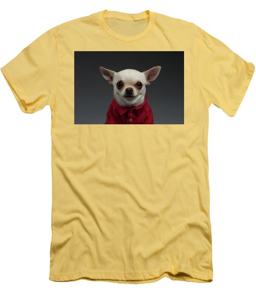 Closeup Portrait Chihuahua Dog In Stylish Clothes. Gray Background Men's T-Shirt (Slim Fit) by Sergey Taran