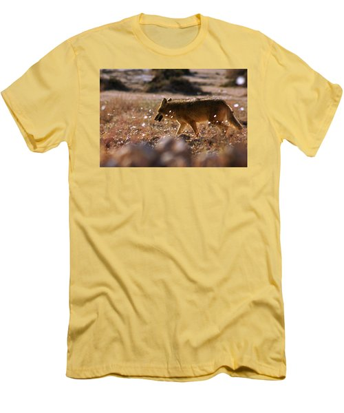 Death Valley Coyote And Flowers Men's T-Shirt (Slim Fit) by Daniel Woodrum