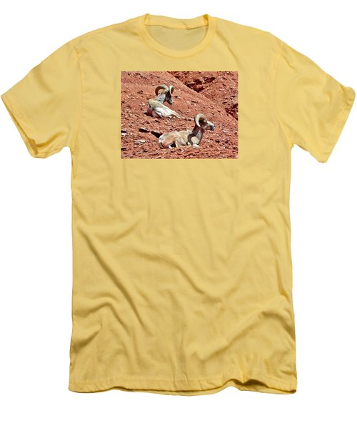 Desert Big Horn Sheep Capitol Reef National Park Utah Men's T-Shirt (Slim Fit) by Deborah Moen