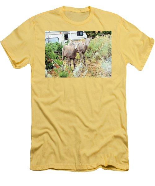 Kid Goats Men's T-Shirt (Athletic Fit)