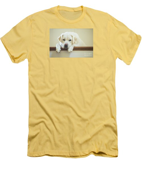 Labrador Retriever On The Stairs Men's T-Shirt (Slim Fit) by Diane Diederich