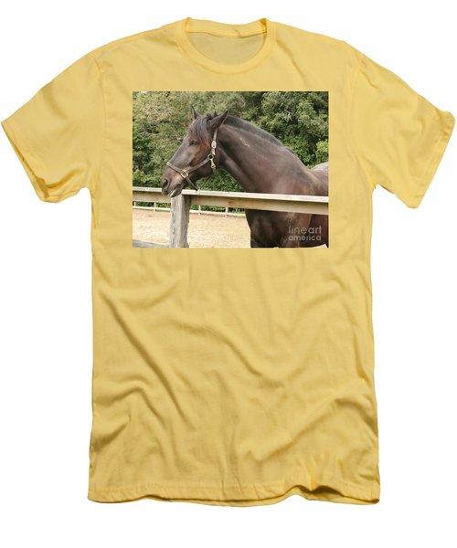 Majestic Horse  Men's T-Shirt (Athletic Fit)