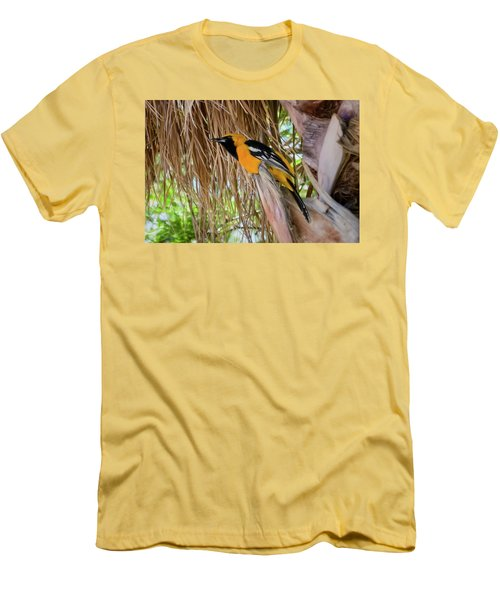 Male Hooded Oriole H17 Men's T-Shirt (Athletic Fit)