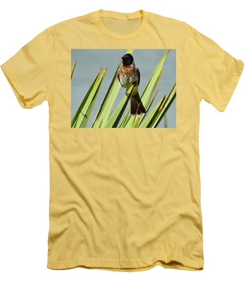 North - Eastern African Home - Close Up Yellow And Black Bird 3 Men's T-Shirt (Athletic Fit)