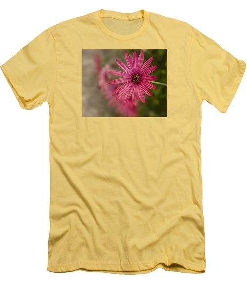 Osteospermum The Cape Daisy Men's T-Shirt (Athletic Fit)