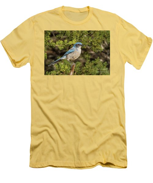 Perched Scrub Jay Men's T-Shirt (Athletic Fit)
