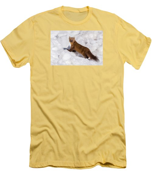 Pine Marten In Snow Men's T-Shirt (Slim Fit) by Yeates Photography
