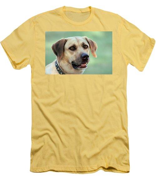 Portrait Of A Yellow Labrador Retriever Men's T-Shirt (Athletic Fit)