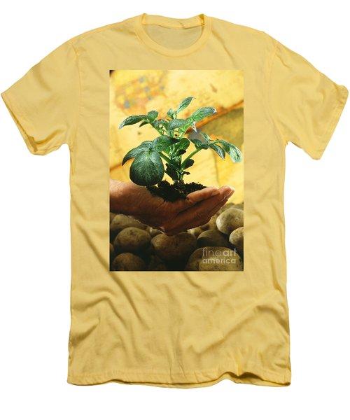 Potato Plant Men's T-Shirt (Slim Fit) by Science Source