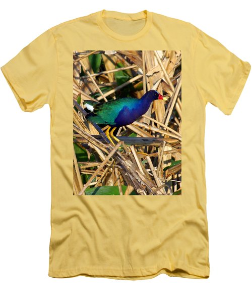 Men's T-Shirt (Slim Fit) featuring the photograph Purple Galinule 003 by Chris Mercer