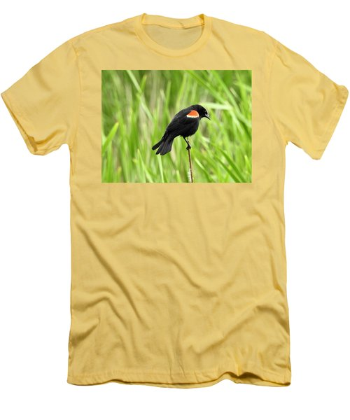 Red-winged Blackbird Men's T-Shirt (Slim Fit) by Brian Chase