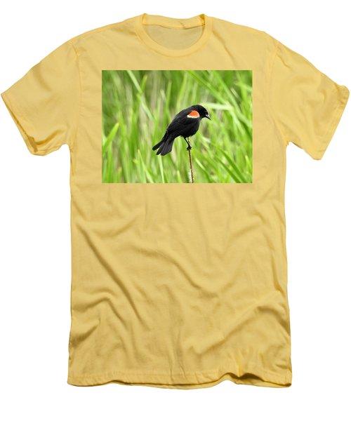 Red-winged Blackbird Men's T-Shirt (Slim Fit)