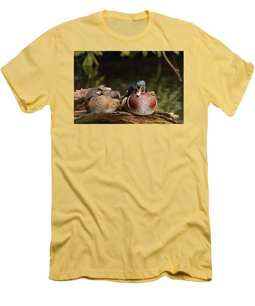 Resting Wood Ducks Men's T-Shirt (Athletic Fit)