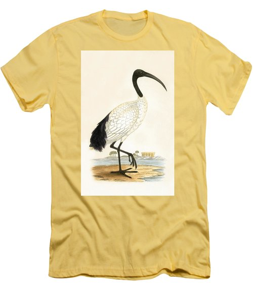 Sacred Ibis Men's T-Shirt (Slim Fit) by English School