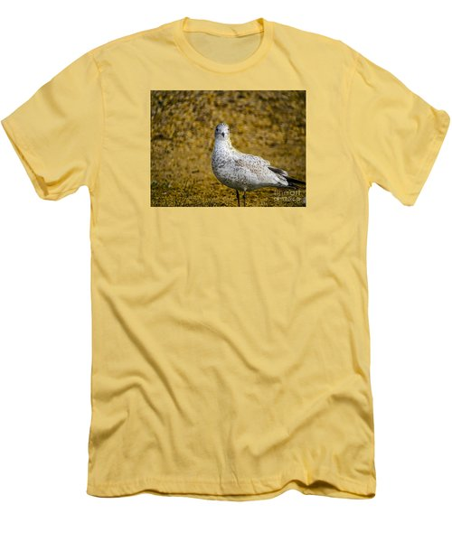 Men's T-Shirt (Slim Fit) featuring the photograph Seagull Family by Melissa Messick