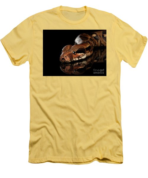 The Boa Constrictors, Isolated On Black Background Men's T-Shirt (Slim Fit) by Sergey Taran