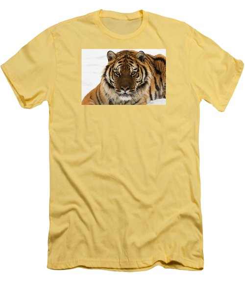 Tiger Stare Men's T-Shirt (Athletic Fit)