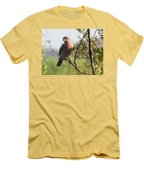 Young Male House Finch Men's T-Shirt (Athletic Fit)