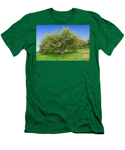 Large Apple Tree Men's T-Shirt (Slim Fit)