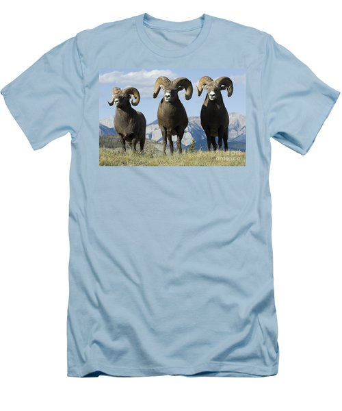 Big Horn Sheep Men's T-Shirt (Slim Fit) by Bob Christopher