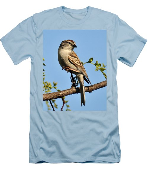 Chipping Sparrow 246 Men's T-Shirt (Athletic Fit)