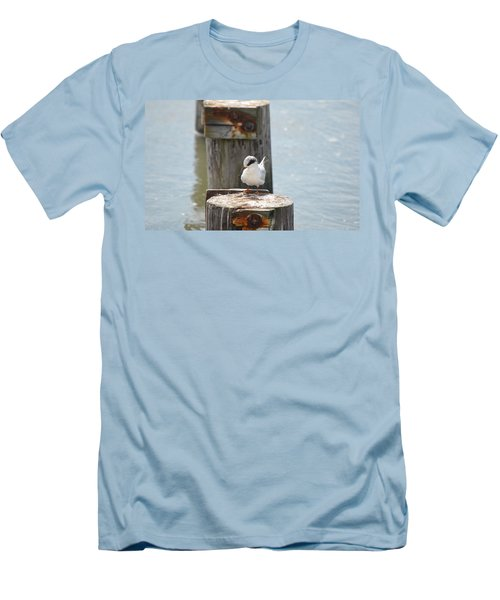 Forster's Tern Men's T-Shirt (Athletic Fit)