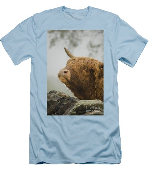 Majestic Highland Cow Men's T-Shirt (Athletic Fit)