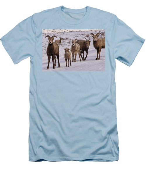 Men's T-Shirt (Slim Fit) featuring the photograph Not Too Sheepish by Priscilla Burgers