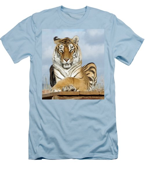 Out Of Africa Tiger 3 Men's T-Shirt (Athletic Fit)