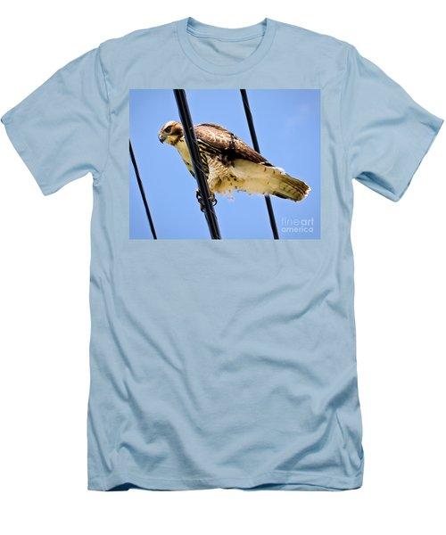 Redtailed Hawk Men's T-Shirt (Athletic Fit)