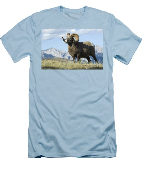 Rocky Mountain Big Horn Sheep Men's T-Shirt (Slim Fit) by Bob Christopher