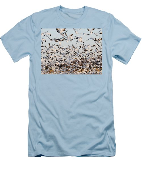 Snow Geese Takeoff From Farmers Corn Field. Men's T-Shirt (Athletic Fit)